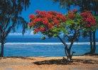 flamboyant lagon